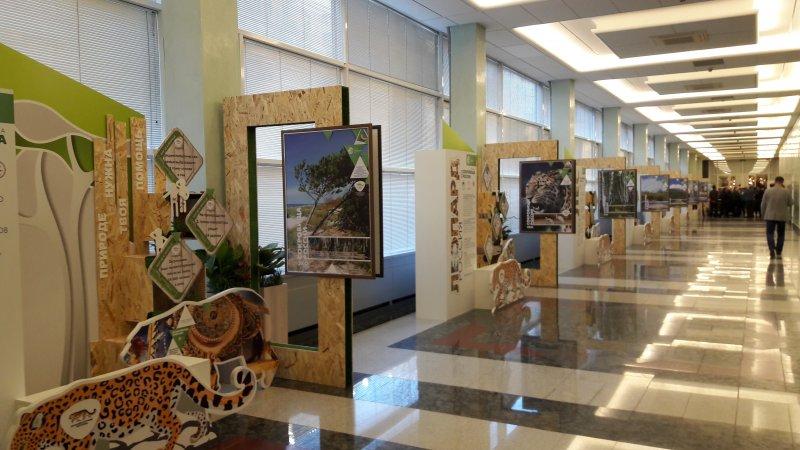 Организованная выставка